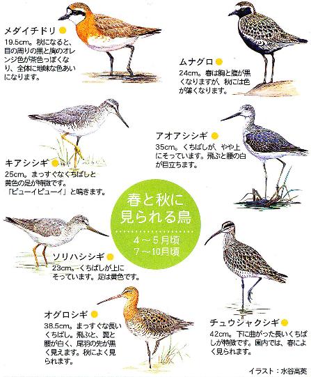 鳥について